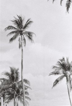 perfect palm trees #photography #nature