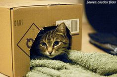 cats and moving stress