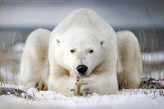 500px, een site waar de betere fotograaf zijn of haar mooiste foto's op zet, heeft een aantal lijstjes gemaakt met de beste foto's in een bepaalde categorie van 2015. Uiteraard mogen de dierenfoto's niet ontbreken.