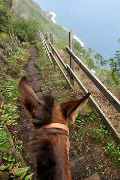 Kalaupapa Mule Ride (USA) 'On the Molokai Mule Ride, from a lofty perch more than 1600ft above Molokaʻi's Kalaupapa Peninsula, you'll ride a sure-footed steed down a steep trail with dizzying switch- backs; the views of the Kalaupapa National Historical Park below are spectacular. At the bottom you'll learn the dramatic tales of Hawaii's former colony for people with Hansen's disease (leprosy).' http://www.lonelyplanet.com/north-america/travel-tips-and-articles/76944