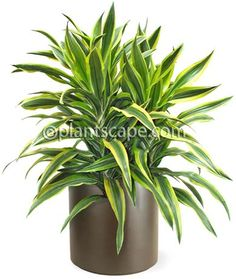 4 Refreshing Clever Tips: Indoor Artificial Plants Tropical artificial plants decoration decor. Artificial Garden Plants, Artificial Plant Wall, Artificial Flowers, Indoor Plants, Pot Plants, Fake Plants, Indoor Garden, Grass Texture, Flowers Australia