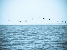 Birds following a fishing boat off the coast of San Diego. I was lucky enough to be on my uncle's boat 'Rum Funny' at the time, we had a great sail, and even had 2 whales swim under the boat and blow water from their blow holes at us!