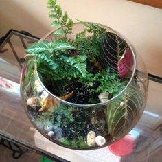 Making Your Own Terrarium
