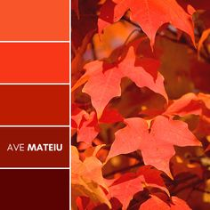 Close-up of bright red autumn maple leaves on tree Color Palette #395 – Ave Mateiu - Fall Autumn 2020, color palette, color palettes, colour palettes, color scheme, color inspiration, color combination, art tutorial, collage, digital art, canvas painting, wall art, home painting, photography, weddings by color, inspiration, vintage, wallpaper, background, rustic, seasonal, season, natural, nature