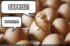 Chicken jokes. They never get old...humor galore!