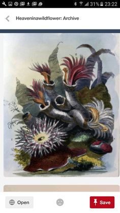 Sea Anemone, Painting, Art, Art Background, Painting Art, Kunst, Paintings, Performing Arts, Painted Canvas