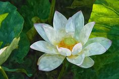 Blossom Lotus Flower 1 by Jeelan Clark Lotus Pond, New Print, Lotus Flower, Coupon, Gardens, Wall Art, Wallpaper, Flowers, Plants