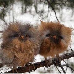 buhitos despeinados =) adorables
