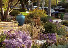 At the front of the flagstone terrace is an aqua fountain. The area is both visible yet shielded from the street by plants. Textures and colors form a living mosaic with purples and yellows as the main colors of the palette as is typical for Mediterranean gardens. Passersby are known to stop and stare at this enchanting front yard.