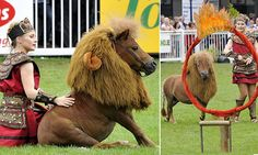 'Shet-LION' pony Luma becomes the mane attraction at Dublin Horse Show Woodland Nursery, Woodland Animals, Horse Costumes, Lion Mane, Bunny And Bear, Horse Pattern, Mane Attraction, Baby Deer, Animal Nursery