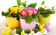 Цветы для тельца