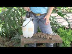 Video: Seedling Watering Trick | eHow