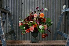 Vervain   UK Florals
