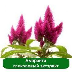 Гликолевый экстракт Амаранта (пр-во Германия) – лечебно-косметический натуральный актив с выраженным ранозаживляющим и антиоксидантным свойством.