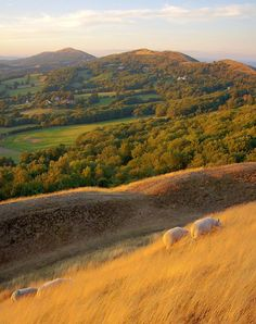 Malvern Hills, Worcestershire, England pop in and say hello running from the of October England Ireland, England And Scotland, England Uk, Malvern Hills, Wales, British Countryside, Herefordshire, West Midlands, Great Britain