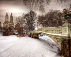 Bow Bow, Central Park by Tyson Rupert