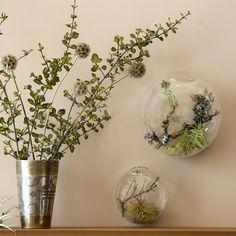 Wall Bubble Aerium - Web Shop - Flora Grubb Gardens