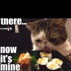 a sushi eating cat, just what i need!