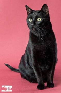 Inky - Adopted!