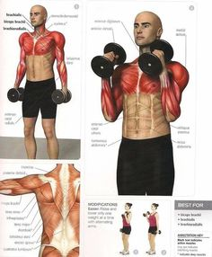 Biceps Exercises - Healthy Fitness Workout Training Arms Bicep
