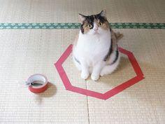 Comment piéger un chat en trois étapes faciles... Trop bon !