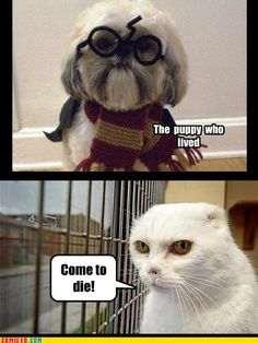 Harry Potter pets