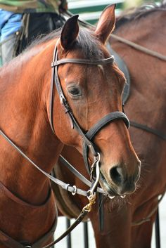 Horse Horses and people obtain a longstanding collaboration. Asian wanderers most probably trained the first horses some 4000 years back…