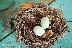 Resultado de imagen para nidos