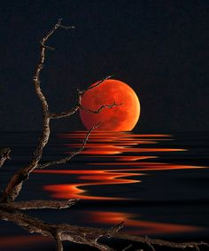 Reflection Photography | Blood Moon Reflection – Photography by Stephen Warren