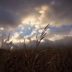 Follow the leader #storm #weather #clouds #wildgrass
