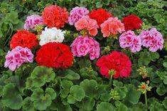 Казалось бы, конец осени, зима и начало весны – время отдыха для садоводов-огородников. Однако те, кто занимаются выращиванием растений не первый год знают, что ...