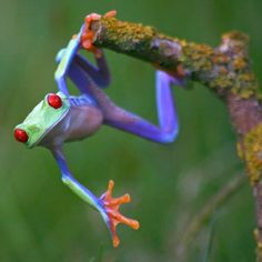 Cool rainbow frog lol
