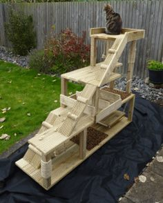 Cat climbing tower. The one costs approx £200 from http://www.cat-climbing-towers.com/horatio.php but I bet that something similar can be home made for a fraction of the price.