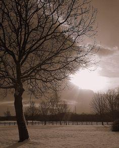 Snowy tree, Stanford-On-Soar, December 2010 (slightly photoshopped)