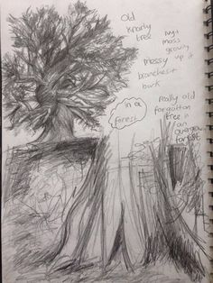 sketches working out what the trees in the forest might look like