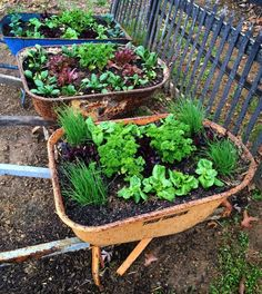Mobile container gardening is getting hot! Don't have the right spot, move the garden.