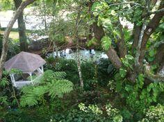 Fish pond garden