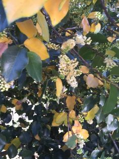 Prunus Issue - http://www.gardenanswers.com/shrubs/prunus-issue/