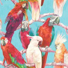 Tapete Vlies Papagei Kakadu anthrazit bunt Rasch 803129 803129 Rasch Tapeten aus der Kollektion Lucy in the Sky von Rasch mit Papagei-Abbildung in anthrazit. Turquoise Wallpaper, Black Wallpaper, Wallpaper Roll, Parrot Wallpaper, Tropical Wallpaper, Albany Wallpaper, Colorful Parrots, Stunning Wallpapers, Parrot Bird