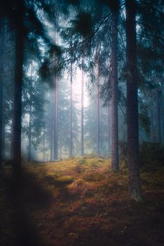 amazinglybeautifulphotography: Mysterious glade in a hazy. Finland Travel, Finland Trip, Nature Photography, Travel Photography, Landscape Pictures, Landscape Photographers, Decoration, The Good Place, Mystery