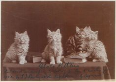 Vintage Photos of Adorable Kittens from 1902