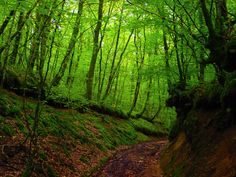 Morvan Woods, makes me want to go to France
