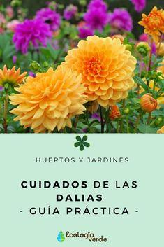 Pernettya Cuidados.10 Ideas De Flores Mes De Agosto Flores Mes De Agosto Jardineria