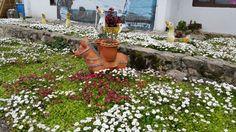 Las flores mejoran cualquier espacio... son importantes dan tranquilidad y felicidad al alma