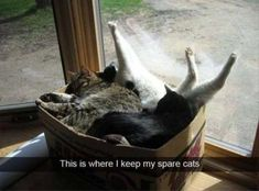 15+ Funny Animal Pictures – Funnyfoto | Funny Pictures - Videos - Gifs - Page 5