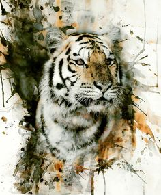 Poster | TIGER SPLASH von Riza Peker | more posters at http://moreposter.de