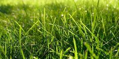 Een mooi gazon in de warme zomermaanden. - tuin - Naober Magazine