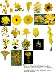 Flower Names By Color Beautiful Flowers Pinterest Flower Names