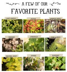 Spring is coming and here is a list with pictures of some great plants to spruce up our yards.