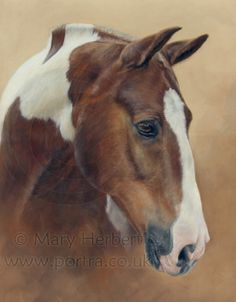 skewbald horse portrait by Mary Herbert